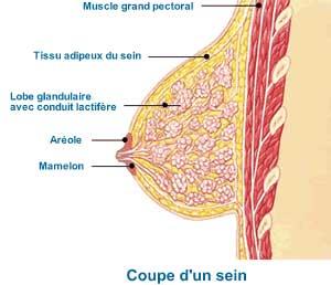 coupe sein